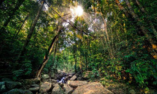 cropped-cropped-cropped-sunburst-in-deep-dark-jungle-1336078.jpg