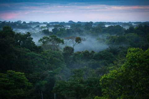 cropped-amazone-rainforest1.png